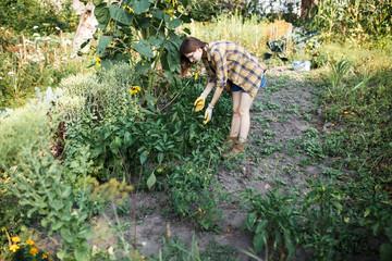 Farmer assessing the state of vegetables on green farm