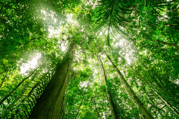 Green forest background texture with branch of tree in sunny light. Sunlight in forest. Canopy of...