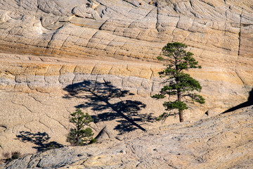 Tree Shadow, Escalante