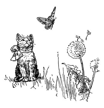 Cat Watching Butterfly, vintage illustration