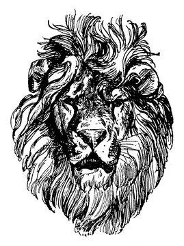Lion Head is a painting by Paul Meyerheim, vintage engraving.