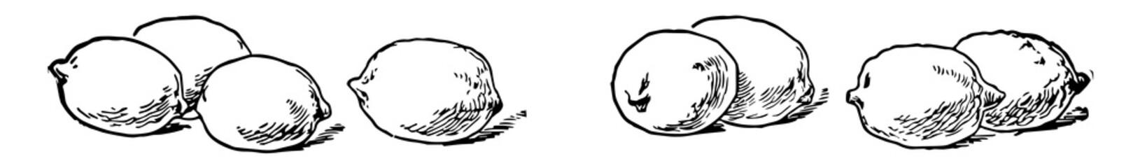 Eight lemons, vintage illustration