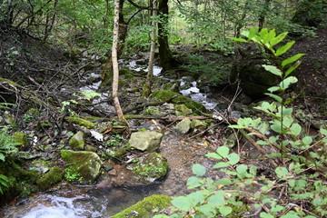 Papiers peints Rivière de la forêt A small river flowing in the mountains