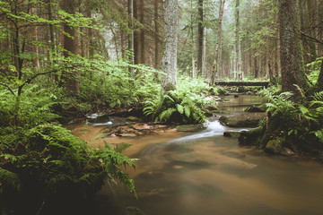 Dark and moody edit of a little creek in a magical fantasy forest in bavaria. Spooky mystical feeling. Rotten  wooden bridge used by knights. Covered with fern and moss. Wall mural