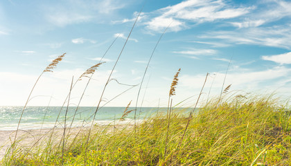Sand Dunes with Grass on Beach with ocean on background
