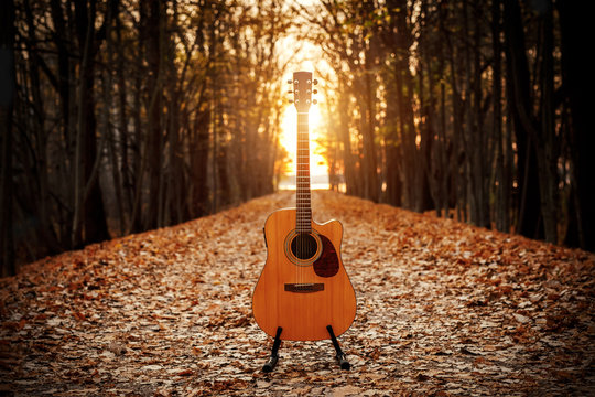 Acoustic guitar in the autumn forest.