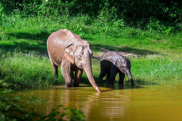 Tuinposter Olifant wild elephant play water