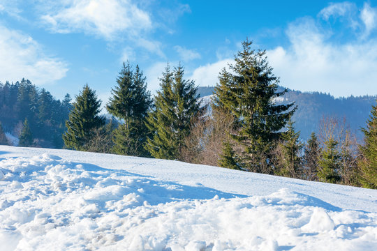 sunny winter day in mountains. spruce trees on the hill. blue sky with clouds