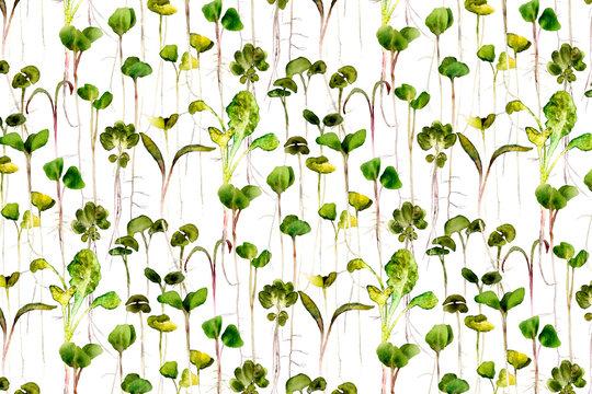microgreens watercolor
