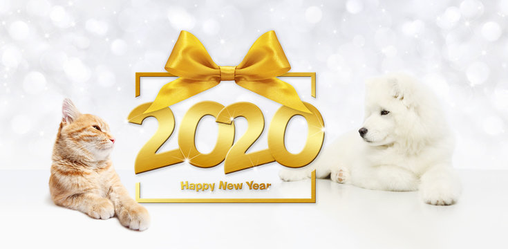 gift card, dog and cat 2020 happy new year text on package frame with golden ribbon bow on christmas lights background