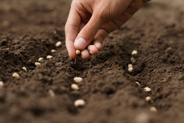 Stores photo Jardin Hand growing seeds of vegetable on sowing soil at garden metaphor gardening, agriculture concept.