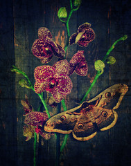 Türaufkleber Schmetterlinge im Grunge Orchid gorgeous purple spotty flowers and butterfly against old wooden background. Moth Saturnia pyri and Tiger orchid. Grammatophyllum speciosum. Orchidaceae flowering plant with buds. Vintage style