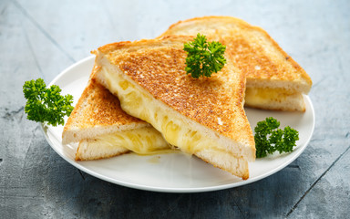 Grilled Cheese cheddar Sandwich on white plate