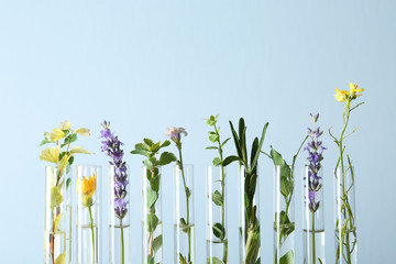 Fototapete - Test tubes with different plants on light blue background