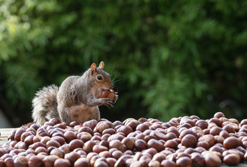 Fotorolgordijn Eekhoorn squirrel and nuts