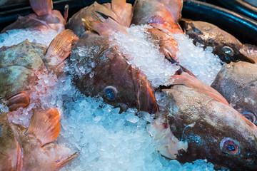 Seafood chilling in ice at the fish market.