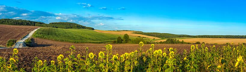 beautiful panoramic view of wheat field, ears and yellow and sunflowers Fotoväggar