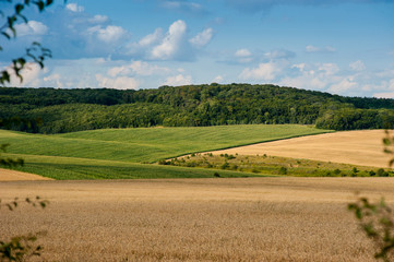 Foto op Canvas Blauw beautiful landscape of wheat field, ears and hills