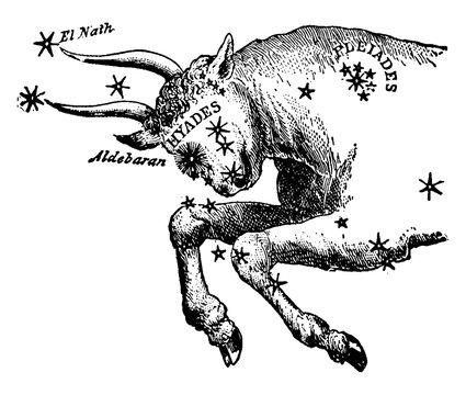 Taurus vintage illustration.