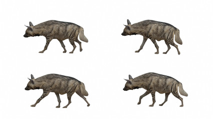 Poster Hyène Striped hyena slowly walking seamlessly looped on black screen, real shot, isolated on alpha channel premultiplied with black and white matte, perfect for digital composition, cinema, 3d mapping.