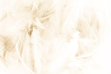Beautiful abstract yellow and brown feathers on white background and colorful soft orange feather texture