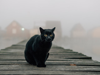 Black cat outdoor. Foggy morning over the lake.  Wall mural