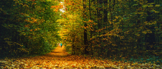 A woman athlete run in the autumn forest. Jogging in an amazing autumn forest strewn with fallen...