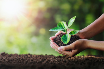 Wall Mural - hand holding young plant on soil and green nature background. eco concept