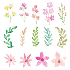 Watercolor flowers and leaves collection
