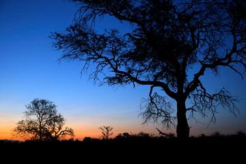 Sundown in Balule Nature Reserve. Kruger National Park, South Africa