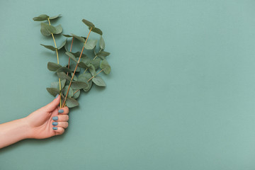 Wall Mural - Female hand with trendy manicure and branches of eucalyptus on green background.