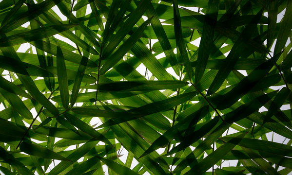 Green leaf shadow background image