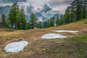 Wall Mural - Amazing spring landscape with green pines in Julian Alps, Slovenia