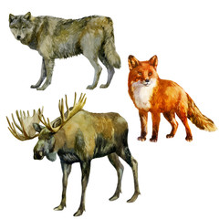 Watercolor illustration, set. Forest animals. Wolf, fox, moose.