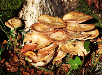 Pilze wachsen an einem Baumstamm