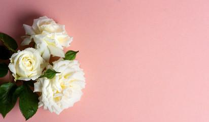 White roses arrangement on pastel background