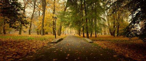 Autumn park with orange leaves panorama