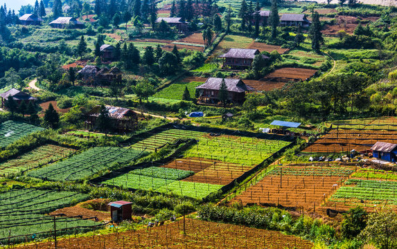 Small scale agriculture in Sapa, Vietnam