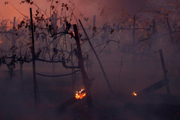 Vines smolder in a cloud of smoke during the wind-driven Kincade Fire in Healdsburg