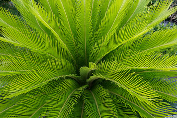 Green leaf of palm tree Wall mural