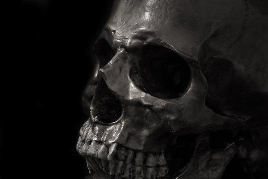 skull on black background.