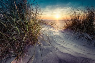 Beautiful scenery of grass grown in the sand on the seashore with sunset in the background