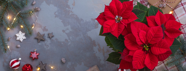 Christmas Red Poinsettia potted over presents, toys and candies in concrete vintage background with sparkling garland