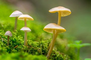 Fresh tasty mushrooms from the green forest
