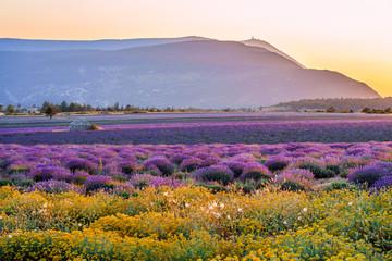 Tuinposter Lavendel Vue sur le Mont Ventoux, depuis le village de Ferrassières. Champ de lavande et cabane en pierres sèche (borie) au milieu du champ. Coucher de soleil.