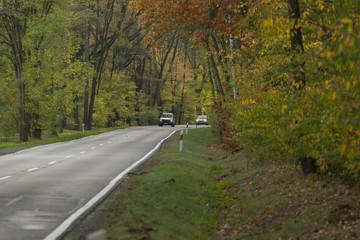 Fototapeta Asfaltowa droga przez jesienny las. obraz