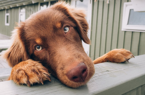 Bettelnder Hund am Gartenzaun