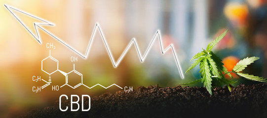 Business marijuana leaves cannabis stock success market price arrow up profit growth charts graph money display screen up industry trend grow higher quickly. Cannabis of the formula CBD cannabidiol Wall mural