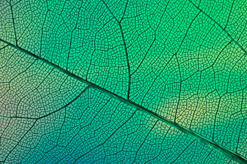 Tuinposter Macrofotografie texture of green leaf background