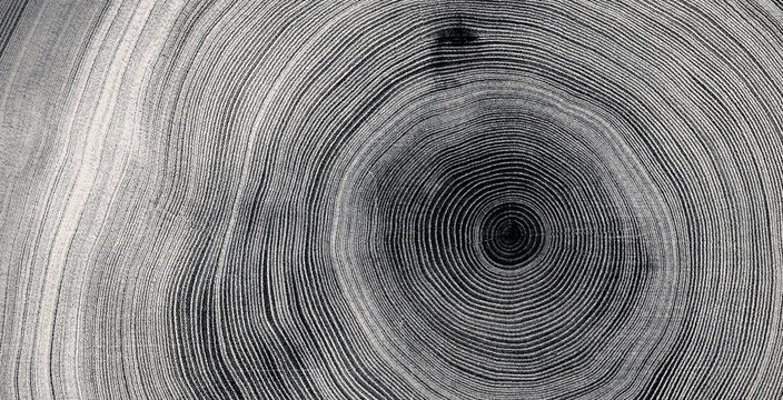 Old wooden tree cut surface. Detailed black and white texture of a felled tree trunk or stump. Rough organic tree rings with close up of end grain.